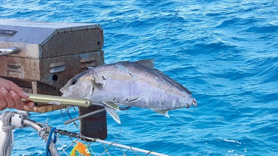 Poor unknown species of fish.